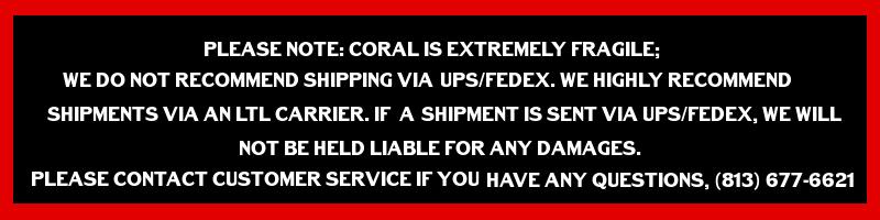 coral-warning.png