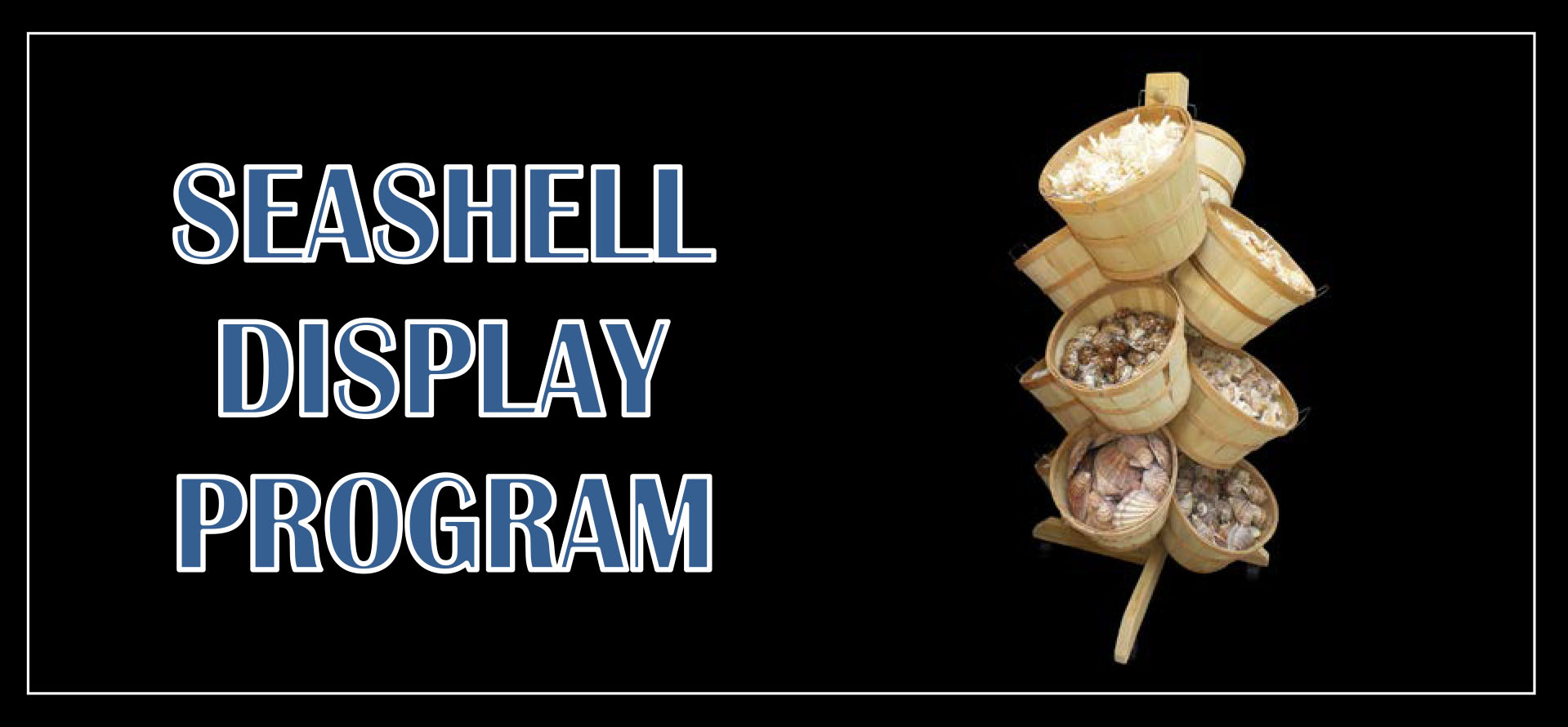 seashell-display-program.jpg